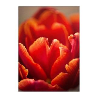 Pretty Red Tulip Petals photo. Nature photography. Acrylic Wall Art
