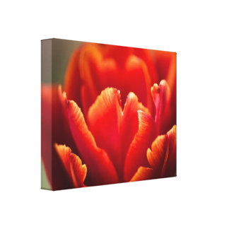 Pretty Red Tulip Petals photo. Nature photography. Canvas Print