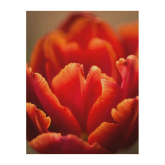 Pretty Red Tulip Petals photo. Nature photography. Wood Wall Art
