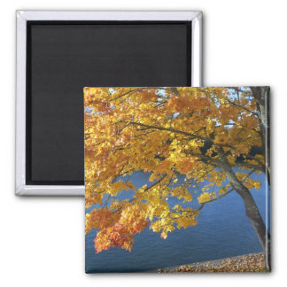 Pretty river scene magnet