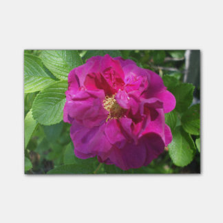 Pretty Rose Flower Post-it Notes