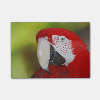 Pretty Scarlet Macaw Post-it Notes