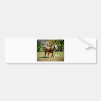 Pretty Shetland Pony Bumper Sticker