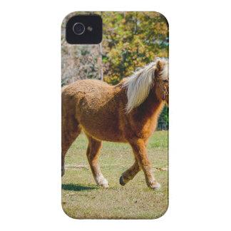 Pretty Shetland Pony iPhone 4 Case-Mate Case