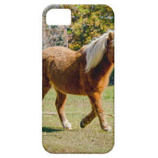Pretty Shetland Pony iPhone 5 Cover