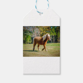 Pretty Shetland Pony Pack Of Gift Tags