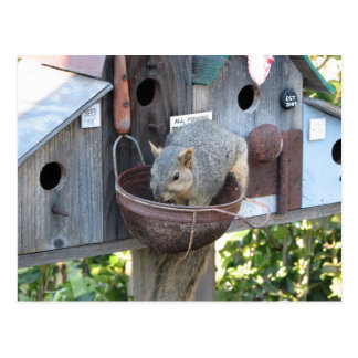 Pretty Squirrel Eating Postcards