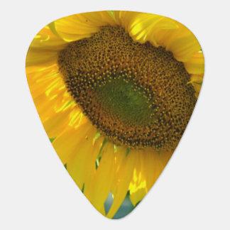Pretty Sunflowers Pick