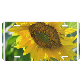 Pretty Sunflowers License Plate