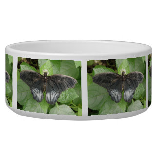 Pretty Tropical Butterfly and Flowers Dog Bowl