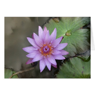 Pretty Water Lily Lotus Flower Card