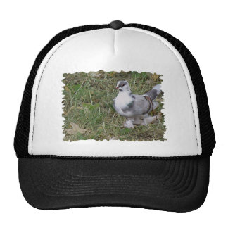 Pretty White and Gray Fancy Feather Footed Pigeon Trucker Hat