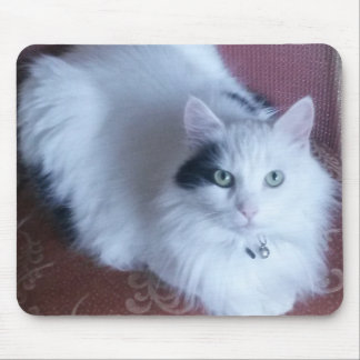 Pretty white fluffy cat with attitude mouse pad