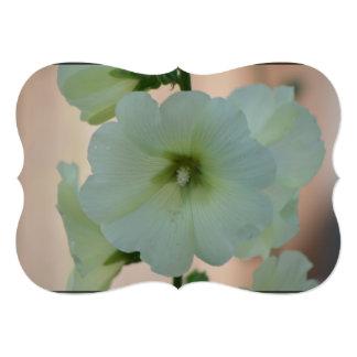 Pretty White Hollyhock Card