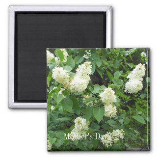 Pretty White Lilac Bush Square Magnet
