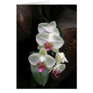 Pretty white orchids sympathy or thank you card