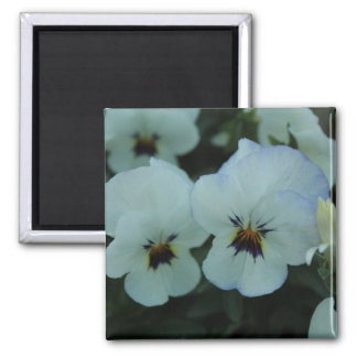 Pretty White Pansies Magnet