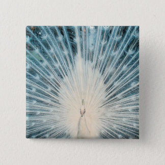 Pretty White Peacock 2 Inch Square Button