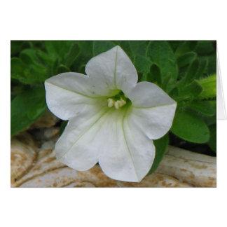 Pretty White Petunia Greeting Card
