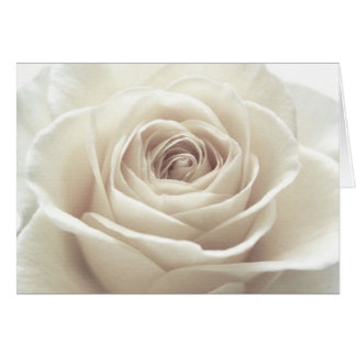 Pretty White Rose Note Card