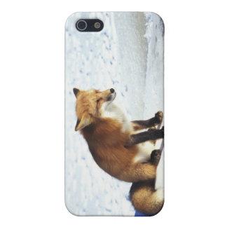 Pretty Winter Fox iPhone 5 Case