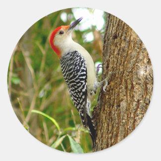 Pretty Woodpecker Bird Stickers