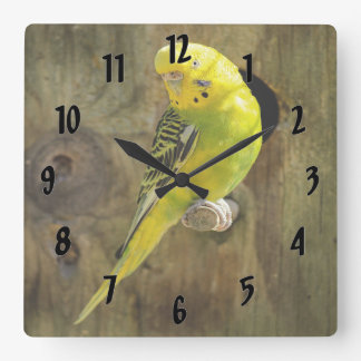 Pretty Yellow Parakeet Square Wall Clock