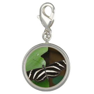 Pretty Zebra Longwing Butterfly Charm