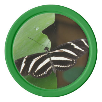 Pretty Zebra Longwing Butterfly Poker Chip Set