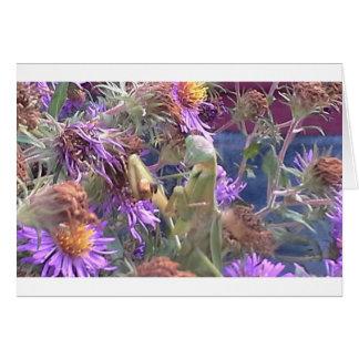 Preying Mantis  & Purple Cone Flowers Card