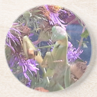 Preying Mantis  & Purple Cone Flowers Coaster