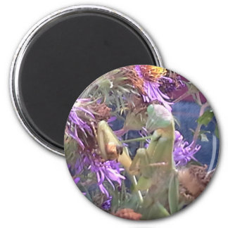 Preying Mantis  & Purple Cone Flowers Magnet