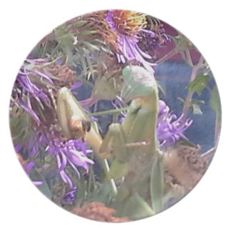 Preying Mantis  & Purple Cone Flowers Plate