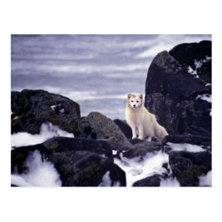 Pribilof Island Oil Spill, M/V Citrus 1996 Arctic Postcard