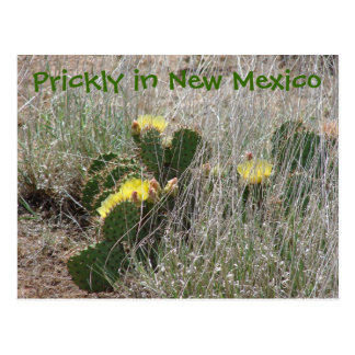 Prickly in New Mexico Postcard