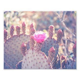 Prickly Pear Blossom | Photo Print