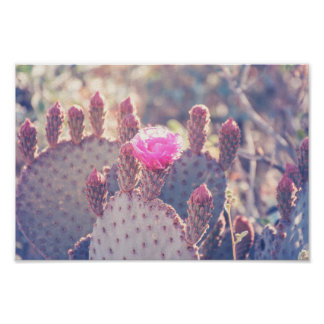 Prickly Pear Blossom | Poster