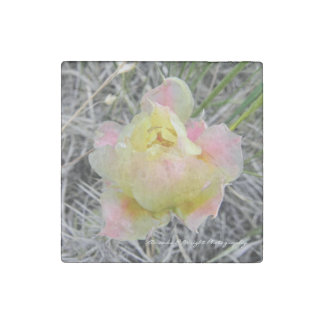 Prickly Pear Cactus Flower Magnet Stone Magnets