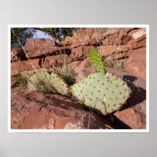 Prickly Pear Cactus in Red Sandstone, Arizona Poster