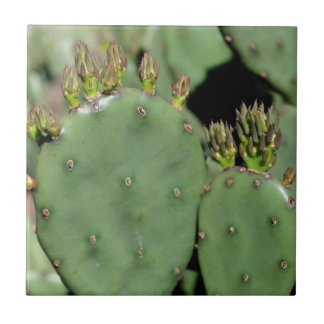 Prickly Pear Cactus Nature Tile