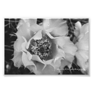 Prickly Pear Cactus Print
