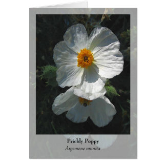 Prickly Poppy - Native Notecard