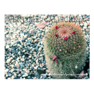 Prickly Ventura Postcard