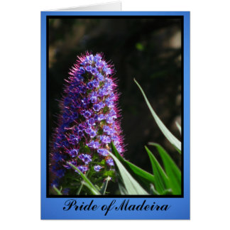 Pride of Madeira Flower Greeting Card