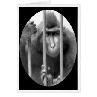 Primate without Parole Card