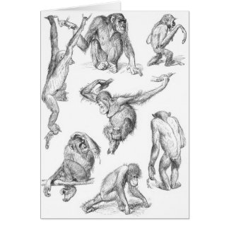 Primates Card