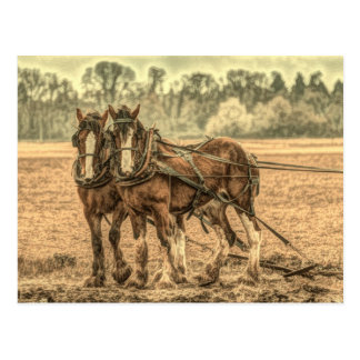 Primitive Western country farm animal draft horses Postcard