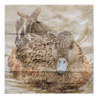 Primitive woodgrain country pond wild duck poster
