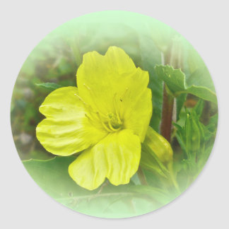 Primrose Yellow Wildflower Coordinating Items Classic Round Sticker