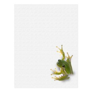 """""""prince"""" frog postcard"""